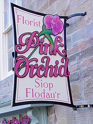 Cardigan Signs for Pink Orchid